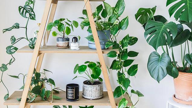 7 formas de decorar con plantas de interior for Adornos para plantas con llantas