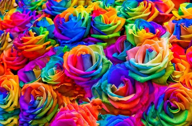 DIY decora tu hogar con rosas multicolores
